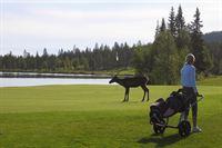 Relax Golfpaketti